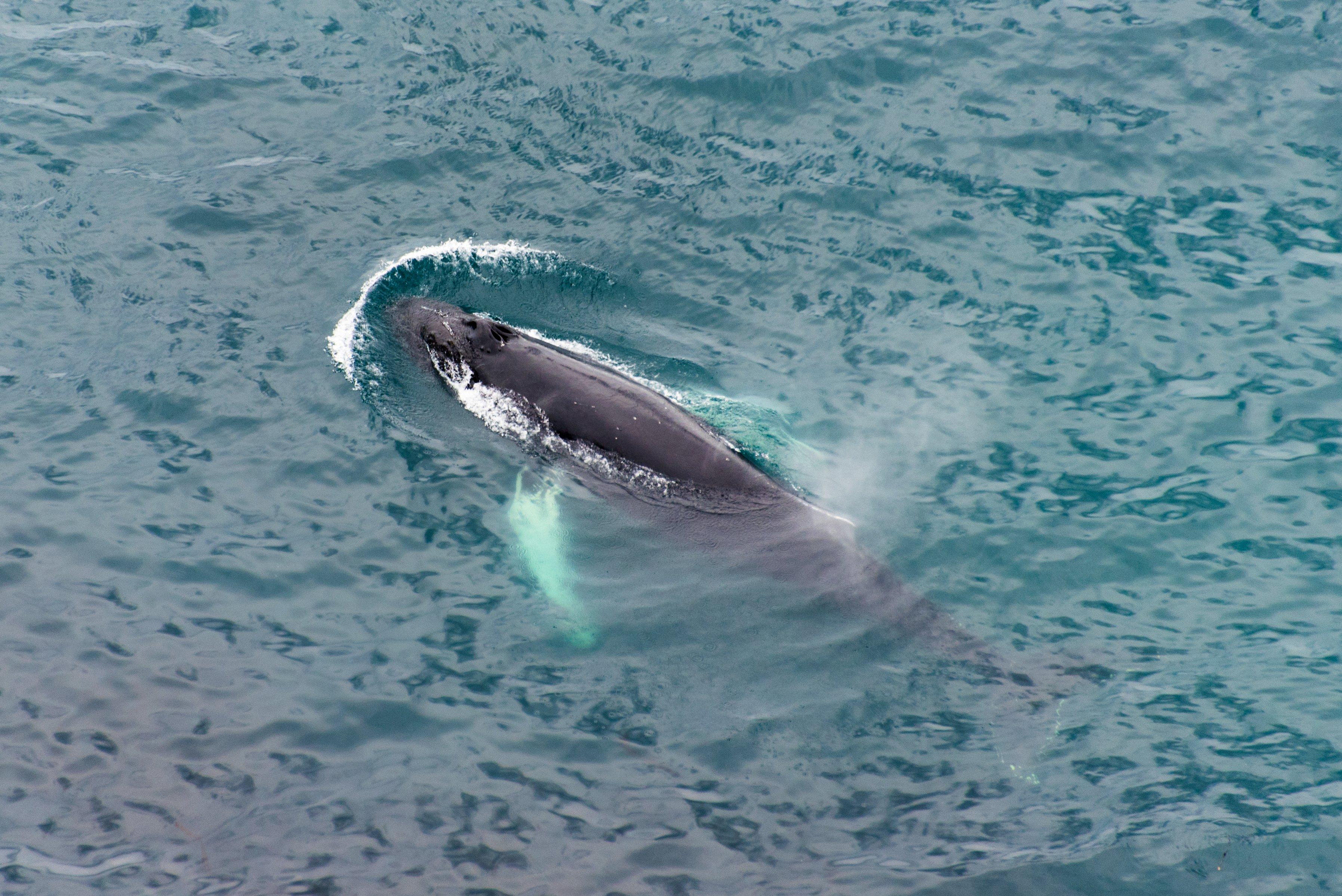 exxon drone whale