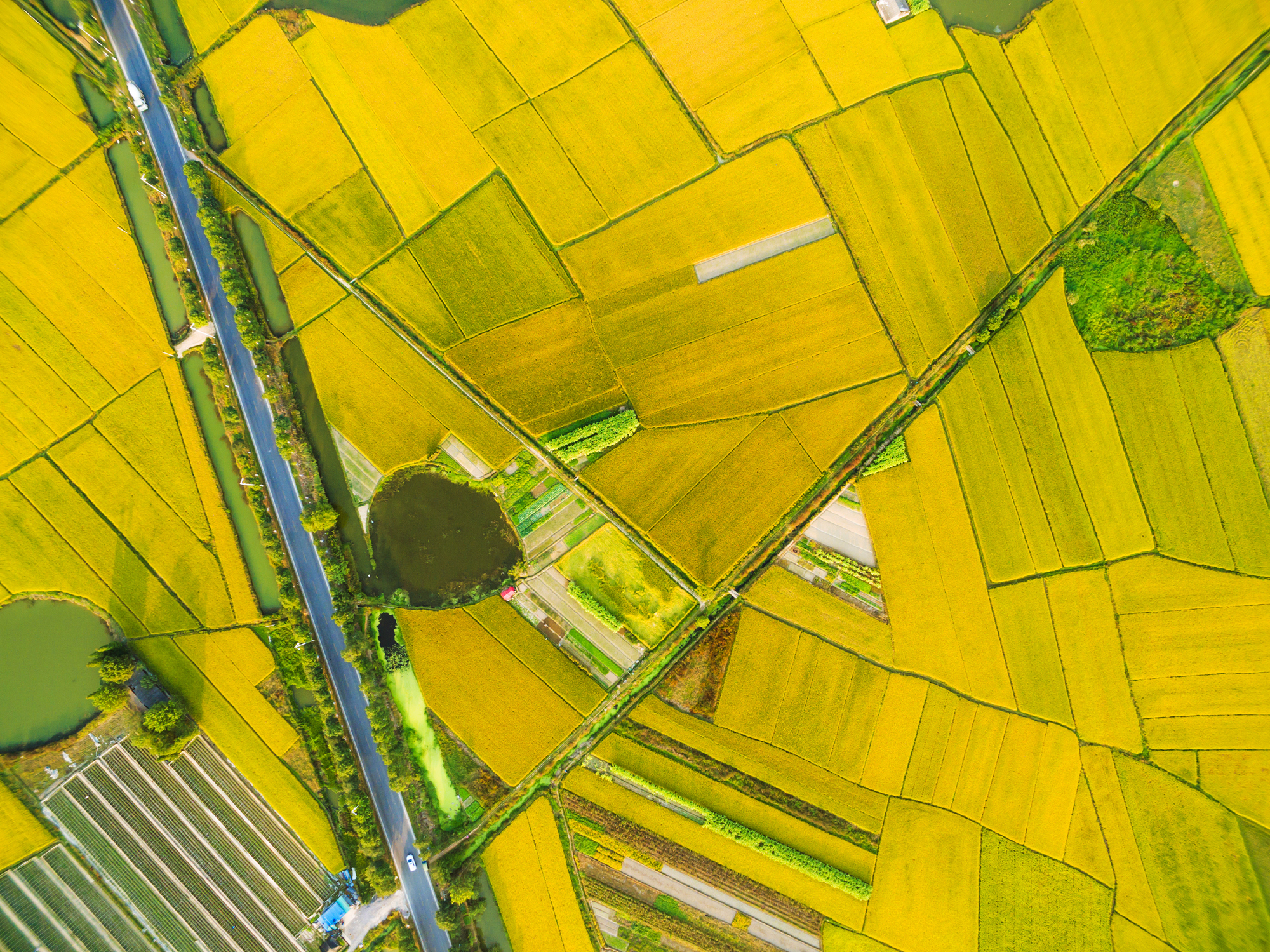 How drones are taking off in the agriculture sector